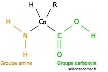 Représentation de Lewis d'un acide aminé.