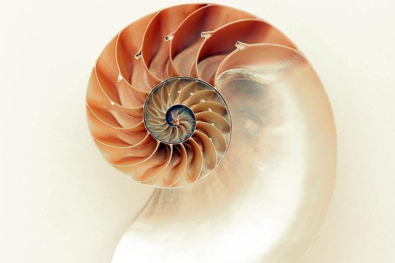 Suite de Fibonacci dans le nautile